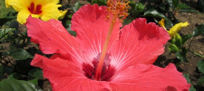 konikoni aloha ブログ開設!