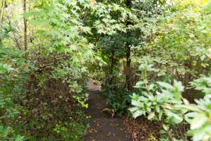 お庭の木のトンネルを越えると・・・
