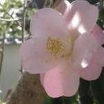 keiko さんのプロフィール写真